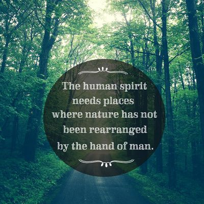 Places in Nature Art Print - trees, typography, font, forest, path, photography