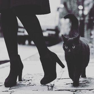 """ωιccαη ωιтcн on Instagram: """"Do you have pets? Today is the"""