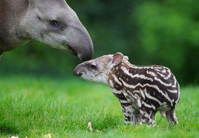 Pin De Weird Animals En Weird Animals That Start With T Animales Unicos Animales Asombrosos Fotos De Animales