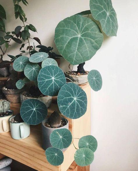 Olivra Homedecor | Houseplant, Cactus & Succulent Decor Shop