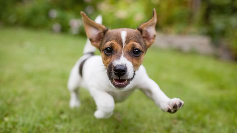 Pauta - Portal Melhores Amigos :: Setembro 2016 I FILHOTES MODIFICAM OS HUMANOS E HUMANOS MUDAM A VIDA DOS ANIMAIS