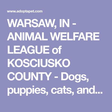 Warsaw In Animal Welfare League Of Kosciusko County Dogs