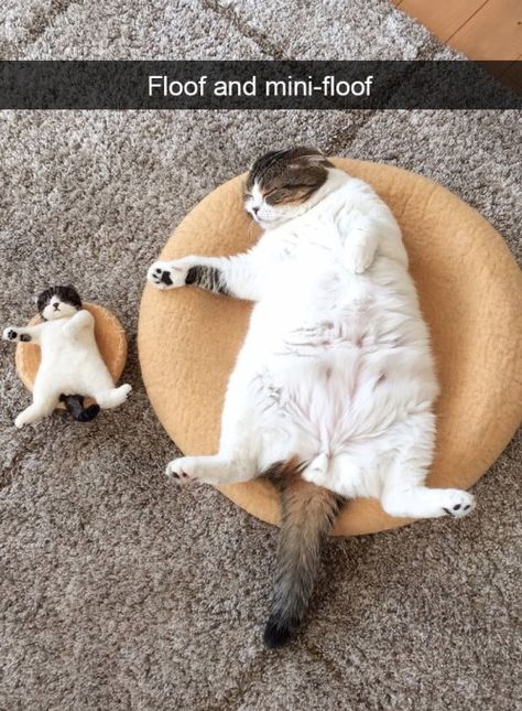 30 Funny Cats To Brighten Up Your Day