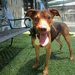 Available Pets At Polk County Animal Control In Winter Haven