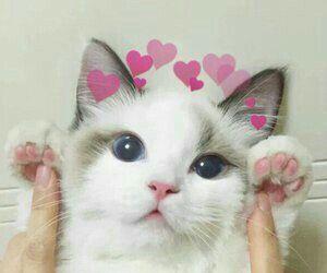 Cataesthetic Cute Cat Memes Cute Cats Pretty Cats