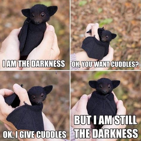 baby bat - Dam The Darkness Om You Want Cuddles? But I Am Still Ok, I Give Cuddles The Darkness