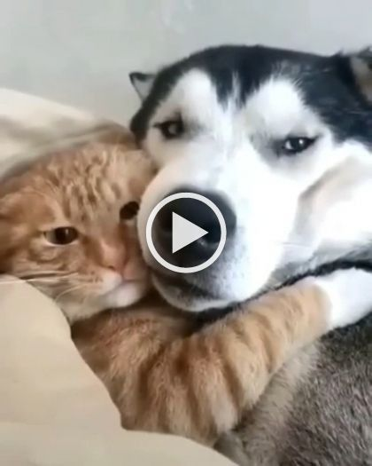Pin By Ruth Escutia On Cats Cute Animals Funny Cat Videos Dog Cat
