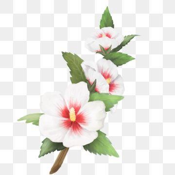 Korean Traditional Flower Hibiscus Flower Illustration Leaf Png