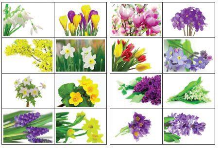 Plakat Wiosenne Kwiaty Scenariusze Zajec I Artykuly Miesiecznik Blizej Przedszkola Kahoot Plants