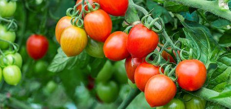 7 Vegetable Garden Tips
