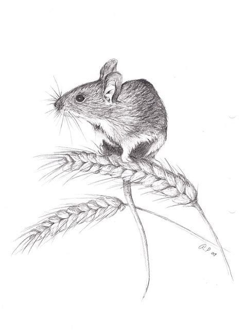 Image Result For Field Mouse Drawing Mouse Drawing Animal