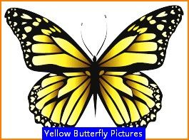 Clouded Yellow Butterfly Pictures Butterfly Clip Art Orange Butterfly Yellow Butterfly Tattoo