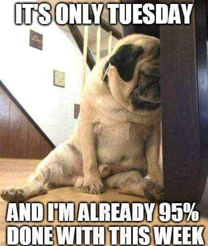100 Funny Tuesday Memes Pictures Images For Motivation Tuesday Humor Tuesday Meme Happy Tuesday Meme