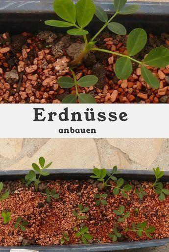 Pin On Bonsai Garden