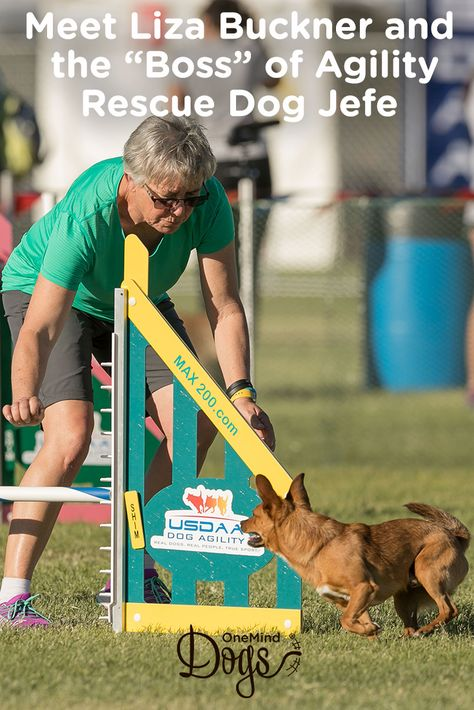 Rescue Dog Jefe Is Boss At Agility Rescue Dogs Agile Dog Agility