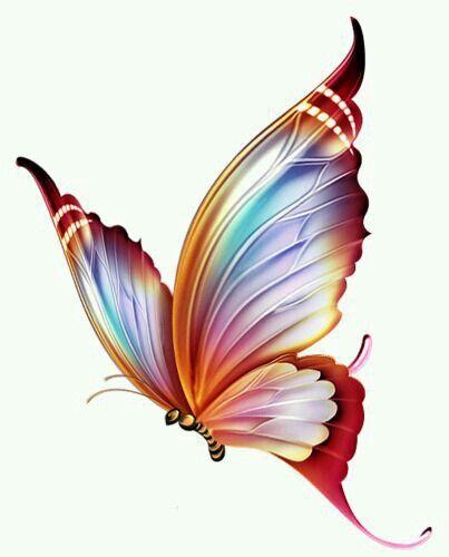 410 butterflysideen  schöne schmetterlinge