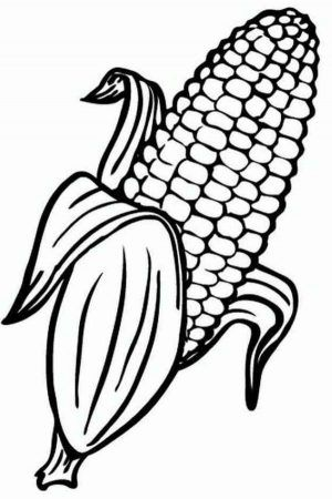 Indian Corn Coloring Page Indian Corn Fall Crafts For Kids
