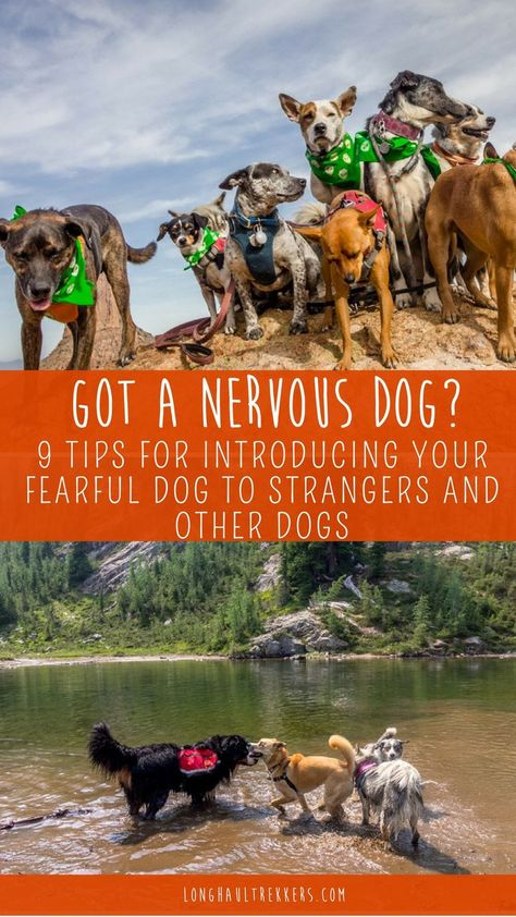 Tips For Introducing Your Nervous Dog To New Dogs Dog Training