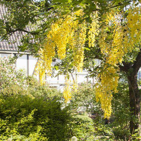 Bunte Trittsteine Fur Den Garten Herstellen Mit Mosaik Steinchen Und Beton Das Haus Straucher Garten Garten Gartengestaltung