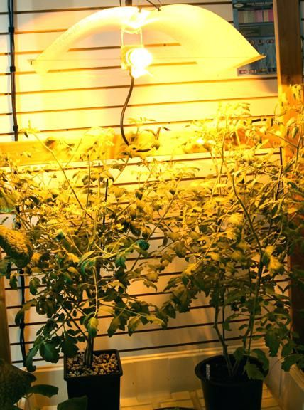 Outdoor Grow Lights For Plants Led, Outdoor Grow Lights