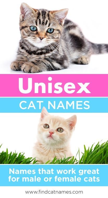 Unisex Cat Names 125 Perfect Names Find Cat Names Cute Cat Names Girl Cat Names Cat Names