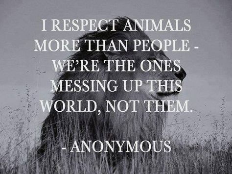 I respect both. But honestly, humanity is being poisoned in every fucking way possible. Sometimes I think it might be better without humans on earths we have done nothing but fuck things up since we got here. Dog Quotes, True Quotes, Dog Sayings, True Sayings, Heart Quotes, People Quotes, Quotable Quotes, Poetry Quotes, Vegan Quotes