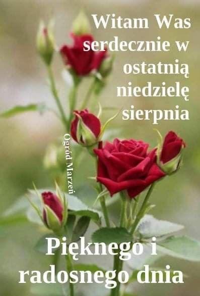 Pin By Wanda Swoboda On Niedziela Plants