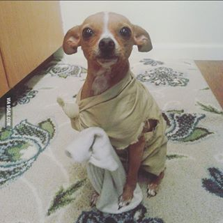 This Dobby dog that has been granted his freedom. | 22 Dogs Who Totally Nailed Their Geeky Halloween Costumes