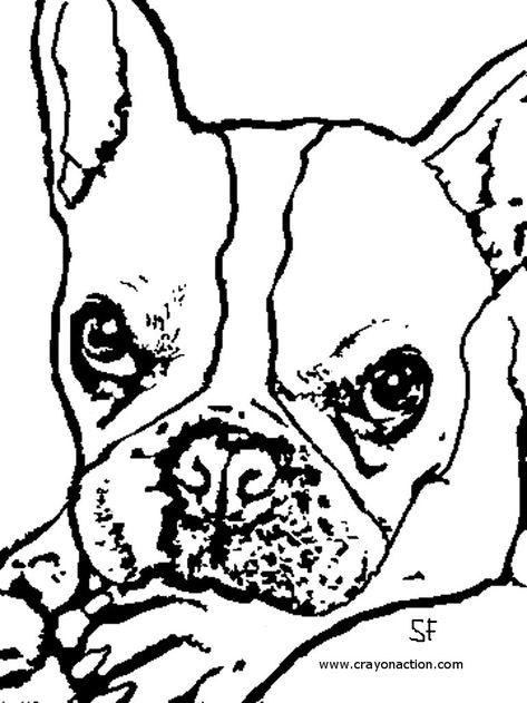 Printable Coloring Page Of A French Bulldog Bulldog Drawing