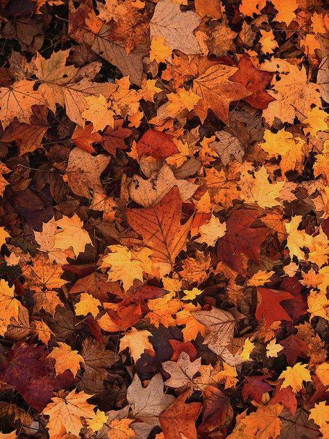 Fallen Autumn Leaves - Art Print - 6.000 x 8.000 / Picture Rag