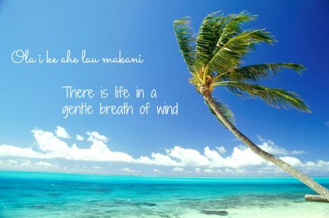 """""""There is life in a gentle breath of wind"""" - Hawaiian Proverb"""