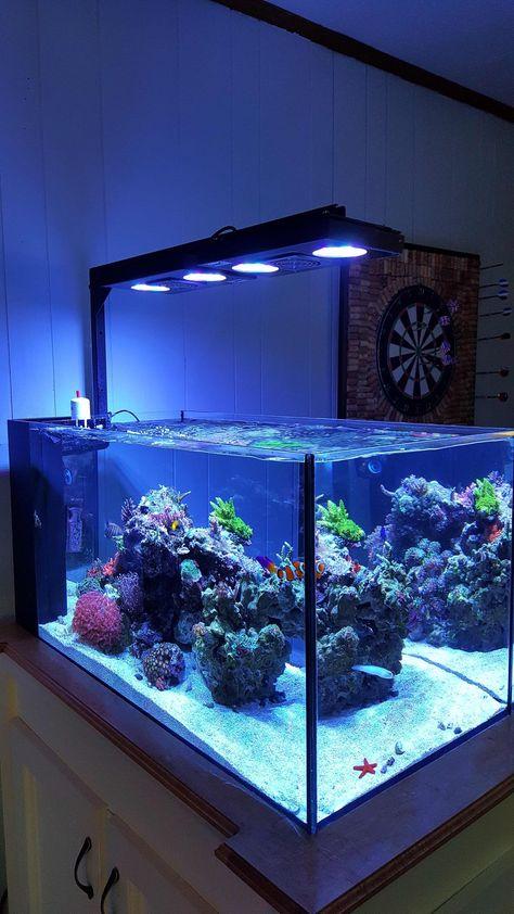 Las Mejores 57 Ideas De Reef Acuario Marino Acuario Marinos Acuario Acuarios
