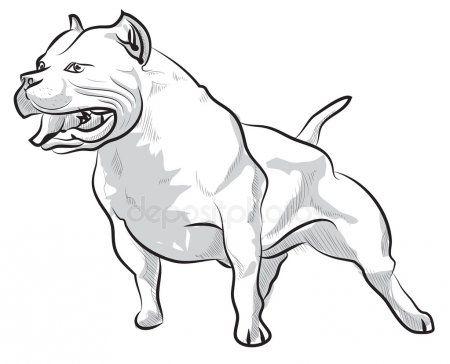 Dibux Pitbull Buscar Con Google Dibujos De Pitbull Pitbull
