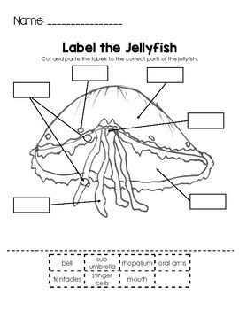 Label the Jellyfish   Ocean lesson plans, Jellyfish ...