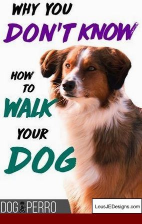 How To Train A Dog To Stop Biting Hands And Pics Of Dog Training