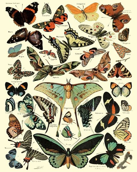 Antique Butterfly Wall Art Print, Butterfly Home Decor, Butterfly Insect Illustration, Wall Art Print