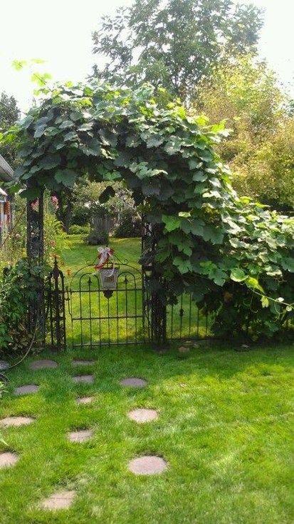 40 Inspiring Grape Vine Ideas To Beautify Your Garden Garden