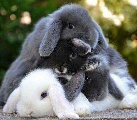 Kaninchen Kaninchen Susse Tiere Baby Kaninchen