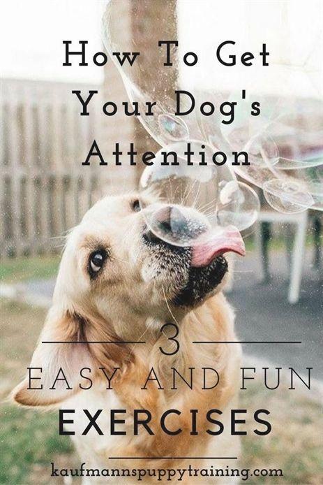 Atlanta Dog Trainer Is The Premier Dog Training And Behavior