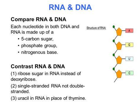 Dna And Rna Differences Venn Diagram Goalgoodwinmetals
