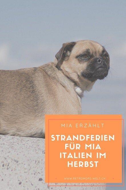 Strandferien Mit Hund In Der Toscana Retromops Mops Hund Hundeblog Schweiz Pfote Hundegeschichten Alltagstipps Hunde Tricks Hundegeschichten Mops Hund Und Hunde