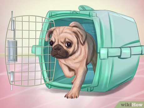 Live With A Pug Dog Pugs Pug Puppies Dogs