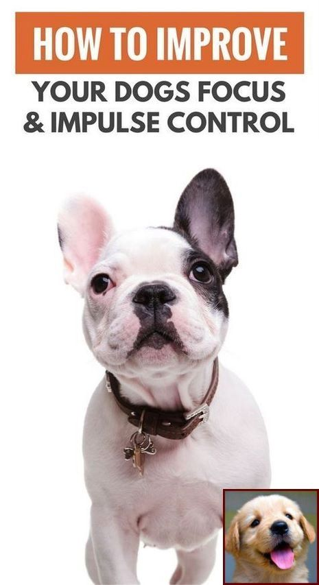 1 Have Dog Behavior Problems Learn About Potty Training A Puppy Spray And Dog Training Classes Cost Training Your Dog Puppy Training Easiest Dogs To Train