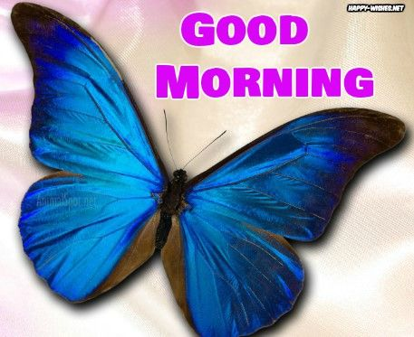 Shining Butterfly Good Morning Images Butterfly Images Good Morning Wishes Good Morning