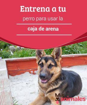 Entrena A Tu Perro Para Usar La Caja De Arena Mis Animales Arena Para Perros Perros Adiestramiento Perros