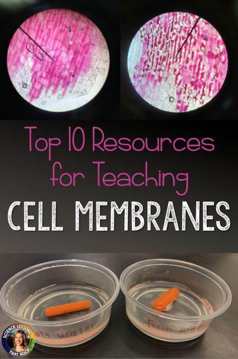 10 Resources for Teaching Cell Membranes