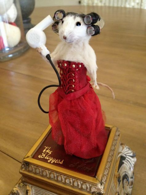 Bizarre thoughts from author Jenny Lawson – Like Mother Teresa, only better. Walpapers Cute, Cute Rats, Baby Animals Super Cute, Cute Little Animals, Funny Animal Jokes, Cute Funny Animals, Funny Taxidermy, Funny Hamsters, Cute Animal Pictures