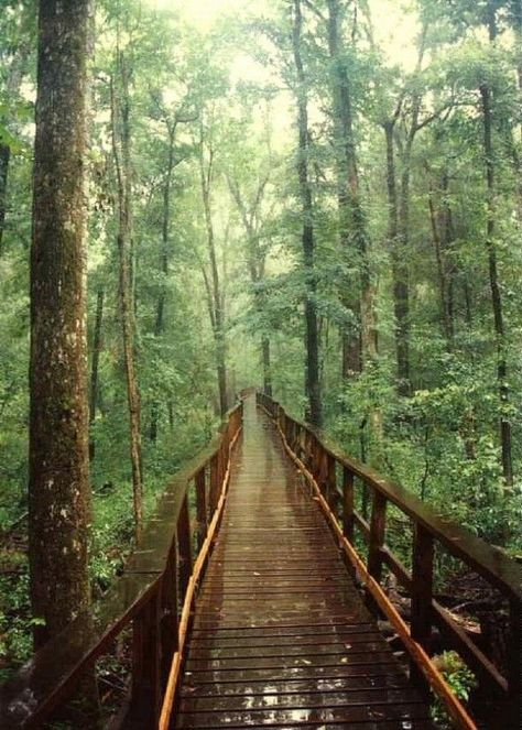 Congaree National Park, the largest intact expanse of old growth bottomland hardwood forest remaining in the southeastern United States.