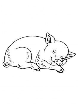 Sleeping Baby Pig - Kleurplaten, Biggetjes en Dieren