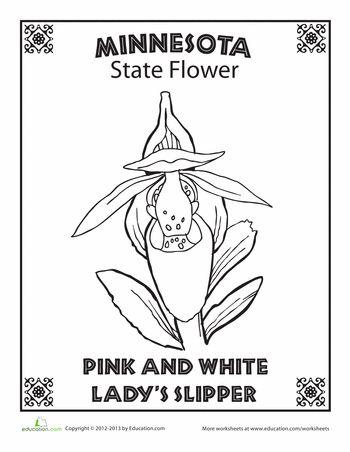 Worksheets Minnesota State Flower